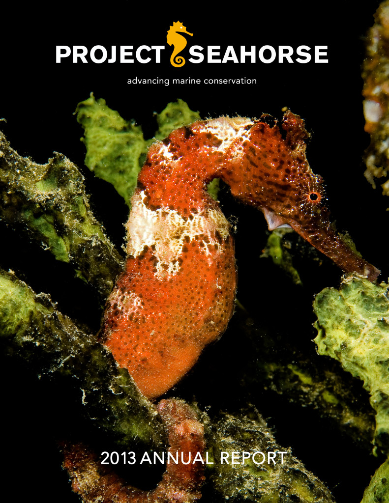 Seahourse Annual Report 2013